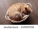 Stock photo ginger cat sleeping in basket 139009550