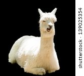 Bizarre Funny Alpaca Isolated...