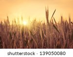 sunset on the field of wheat.... | Shutterstock . vector #139050080