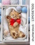 Little Striped Kitten  In A Box ...