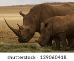 White Rhinoceros With Calf