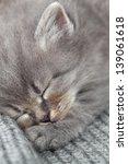 Stock photo the kitten sleeps 139061618