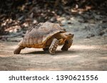 Stock photo african spurred tortoise close up turtle walking selective focus 1390621556