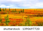 Autumn steppe tundra nature...
