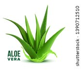 Natural Medicine Foliage Plant...