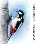 Great Spotted Woodpecker ...