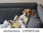 Stock photo cute funny dog with tasty popcorn lying on sofa at home 1390855166