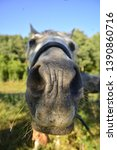 funny close up of a horse's...   Shutterstock . vector #1390860716