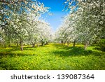 Blooming Apple Trees Garden
