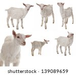 White Goat Collection - Fine Art prints