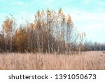 autumn landscape with birch... | Shutterstock . vector #1391050673