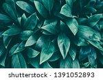 tropical leaf  dark green... | Shutterstock . vector #1391052893