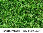 green grass pattern and texture ... | Shutterstock . vector #1391105660