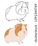 Standing guinea pig illustration on white background. Vector art of hand drawn little cute cavy. Different sketches of small rodents. Drawing animals by free hand.