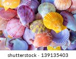 A Number Of Colorful Scallop...
