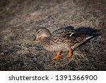wildlife animals wallpapers and ...   Shutterstock . vector #1391366900