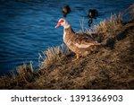 wildlife animals wallpapers and ...   Shutterstock . vector #1391366903