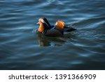 wildlife animals wallpapers and ...   Shutterstock . vector #1391366909