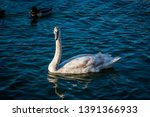 wildlife animals wallpapers and ...   Shutterstock . vector #1391366933