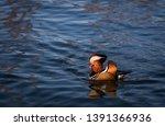 wildlife animals wallpapers and ...   Shutterstock . vector #1391366936