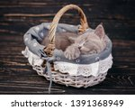 Stock photo scottish straight kitten funny gray kitten in the basket the cat sleeps in the basket 1391368949