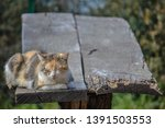 Sleeping Cat On Picnic Table....