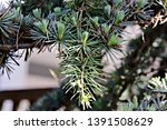 nature macro of a single branch ... | Shutterstock . vector #1391508629