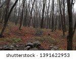 forest landscape. dark... | Shutterstock . vector #1391622953