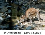 holiday with nature in cairns | Shutterstock . vector #1391751896