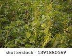 fern between other green... | Shutterstock . vector #1391880569
