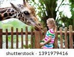 Family Feeding Giraffe In Zoo....