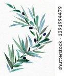 watercolor olive branch. hand...   Shutterstock . vector #1391994479