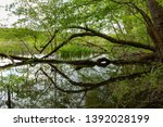 fallen tree and its reflection... | Shutterstock . vector #1392028199