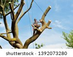 Tree removal. Arborist cutting big branch of a dead elm tree with a chainsaw. - stock photo