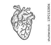 human heart sketch engraving... | Shutterstock . vector #1392132806