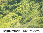 View Of The Hillside With Gree...