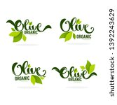 green olive leaves and... | Shutterstock .eps vector #1392243629