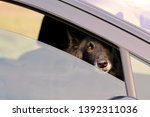 Black dog left in warm car with ...