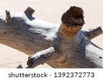 felled trees  windbreak  wood... | Shutterstock . vector #1392372773