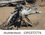 felled trees  windbreak  wood... | Shutterstock . vector #1392372776
