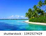 View Of A Tropical Landscape...