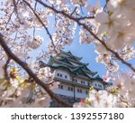 beautiful sakura or cherry... | Shutterstock . vector #1392557180