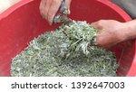 sprig of medicinal wormwood on... | Shutterstock . vector #1392647003