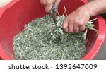 sprig of medicinal wormwood on... | Shutterstock . vector #1392647009