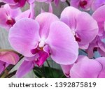 beautiful pink  white orchid... | Shutterstock . vector #1392875819