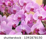 orchid flowers beautiful pink... | Shutterstock . vector #1392878150