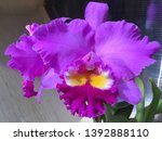 orchid flowers beautiful pink... | Shutterstock . vector #1392888110