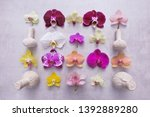 orchid flowers collection ... | Shutterstock . vector #1392889280