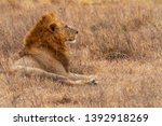male lion close up side view... | Shutterstock . vector #1392918269