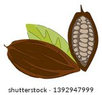 cacao beans  fruit or pod of... | Shutterstock .eps vector #1392947999